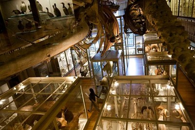 Full-size whale skeletons (below) hang from the ceiling of the renovated Hall of Mammals.