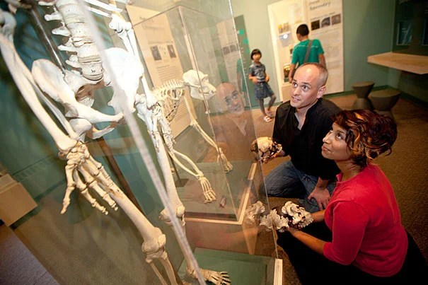 """Harvard researchers Zarin Machanda (right) and Chris Organ are pictured at the Harvard Museum of Natural History's """"Evolution"""" exhibition. The researchers say the rise of cooking likely occurred more than 1.9 million years ago and bestowed on human ancestors a gift of time in the form of hours each day not spent eating. Machanda notes, however, that the rewards from the advent of cooking weren't shared equally. While men were likely freed up to hunt and pursue other activities, an increased burden of food gathering and preparation was placed on women."""