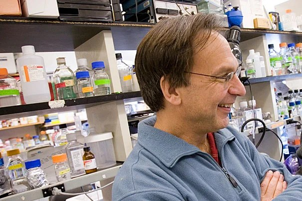 One of the drug prototypes proved capable of reducing disease symptoms in diabetes-prone mice without triggering weight gain or fluid retention, potential side effects of current drugs, according to research conducted in part by Dana-Farber's Bruce Spiegelman, the Stanley J. Korsmeyer Professor of Cell Biology and Medicine at Harvard Medical School.