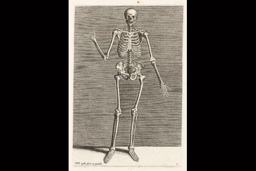 Skeleton by design