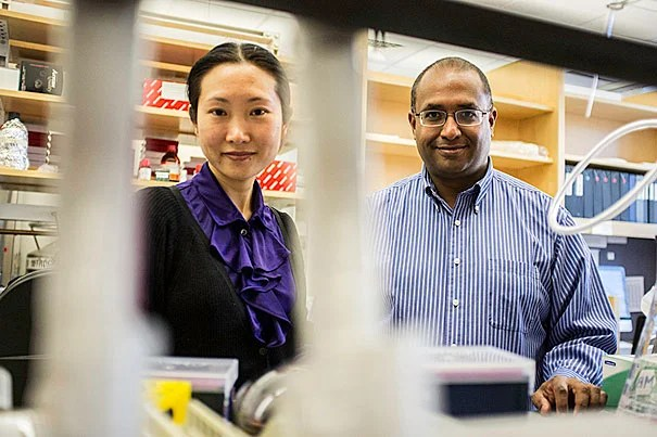 "Using skin cells of patients with cystic fibrosis, Jayaraj Rajagopal (right) and colleagues have created induced pluripotent stem (iPS) cells. ""We're not talking about a cure for CF; we're talking about a drug that hits the major problem in the disease. This is the enabling technology that will allow that to happen in a matter of years,"" said Rajagopal, the senior author on the paper. Postdoctoral fellow Hongmei Mou (left) is first author on the paper. The work is featured on the cover of this week's journal Cell Stem Cell."