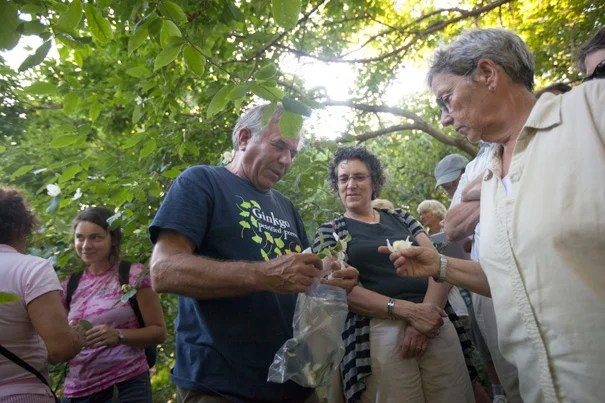 "Peter Del Tredici (center), the Arnold Arboretum's senior research scientist, discusses the Stewartia collection, which dates from 1918. ""You can come here and see these plants, but you don't know anything about them. You could hold your cell phone up [to the bar codes on the signs posted by many plants]. But it's better to have someone tell you,"" said Del Tredici."