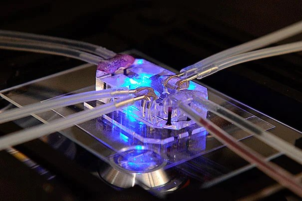 An up-close view of the Lung-on-a-Chip, a microdevice lined by human cells that recapitulates complex functions of the living lung.