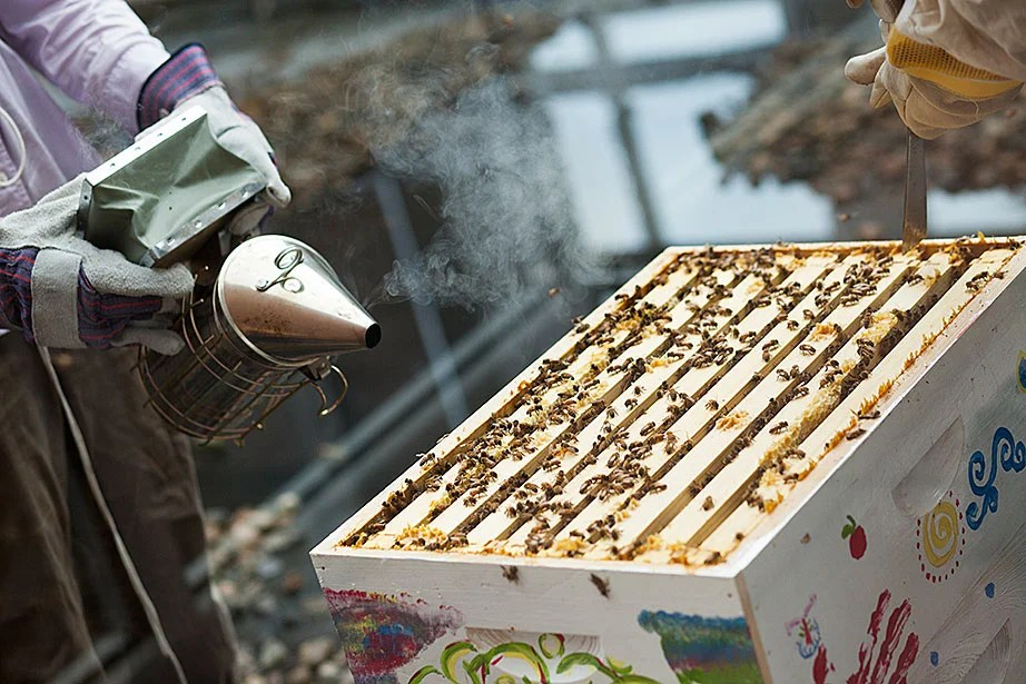 Amalee Beattie '17 (left) assists Li Murphy '15 with the open hive.