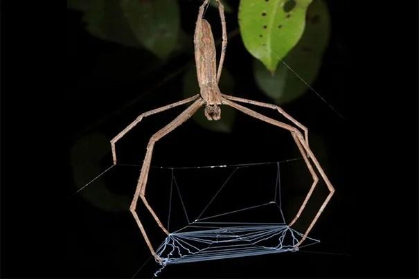 Spider_Vertical_570