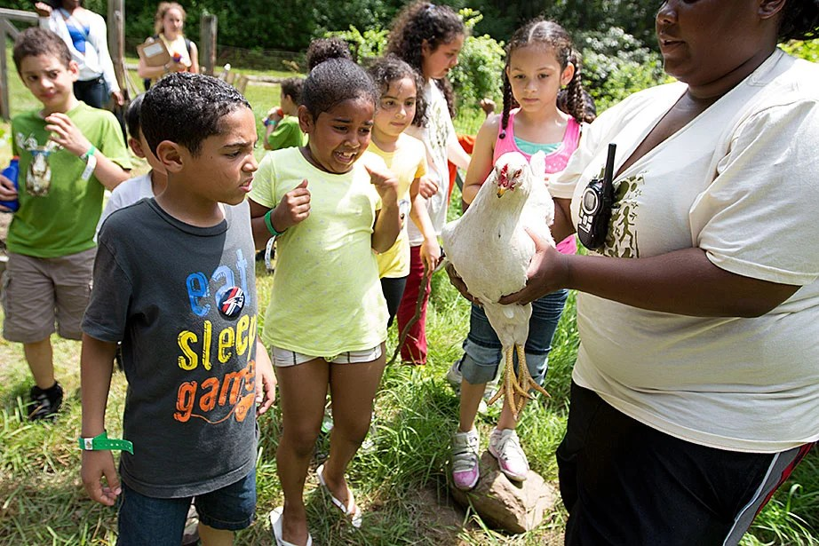 Students reacted to seeing a chicken.