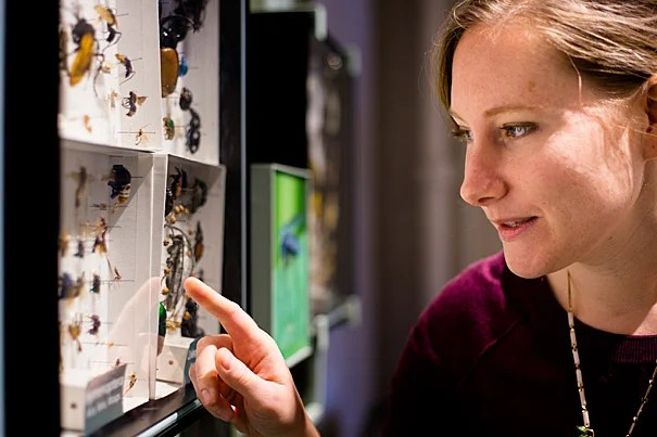 Sarah Kocher is the co-author of a paper on eusociality, which arises when a species, like ants or bees (photo 2), give up some of their own reproductive rights to help raise the offspring of another.