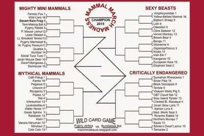 There is serious science behind Mammal March Madness, an annual NCAA basketball-style tournament that pits mammalian species against each other in simulated combat. The Mammal March Madness bracket can be downloaded from the blog of its creator, Assistant Professor Katie Hinde. The idea for the competition grew out of Hinde's love for the NCAA basketball tournament.