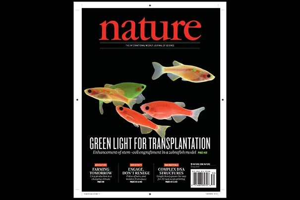 Harvard researchers have found a path to improvement in bone marrow transplants. The findings are featured on the cover of the July 23 issue of Nature. Harvard Stem Cell Institute researchers at Boston Children's Hospital believe it could lead to human trials in patients with cancer and blood disorders within a year or two.