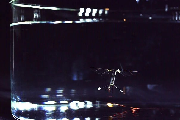 Researchers at the Harvard Paulson School have demonstrated a flying, swimming, insectlike robot, easing the way to create future aerial-aquatic robotic vehicles.