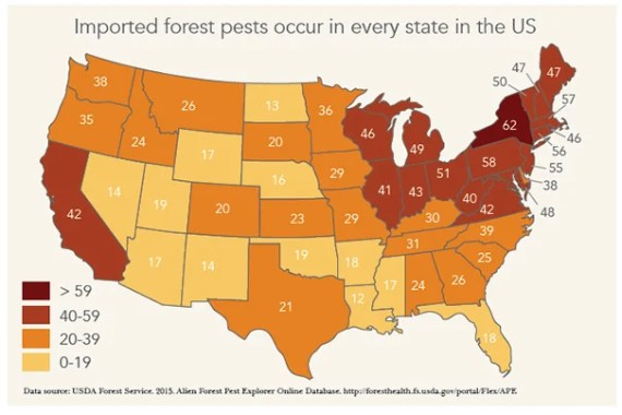 In Massachusetts, neighborhoods in Worcester lost their urban canopy due to an outbreak of Asian longhorned beetle. Emerald ash borer threatens to do additional major damage to forests and community trees throughout the state. Winter moth has severely damaged many forests and neighborhood trees on Martha's Vineyard, Cape Cod, and across the eastern part of the state.