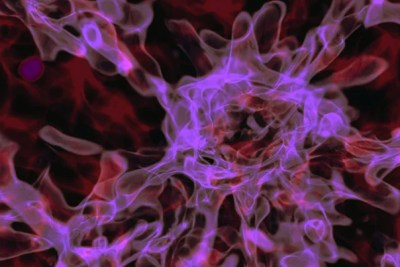"""The cosmological environment where primordial gas undergoes a """"direct collapse"""" into a black hole. The gas flows along dark matter filaments that form a cosmic web, birthing the first galaxies where these filaments intersect."""