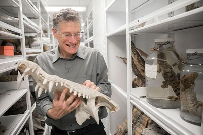 """Harvard biologist Jonathan Losos, pictured handling an American Crocodile skull at the MCZ, talks about his new book, """"Improbable Destinies: Fate, Chance, and the Future of Evolution."""""""