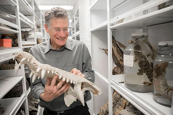 "Harvard biologist Jonathan Losos, pictured handling an American Crocodile skull at the MCZ, talks about his new book, ""Improbable Destinies: Fate, Chance, and the Future of Evolution."""