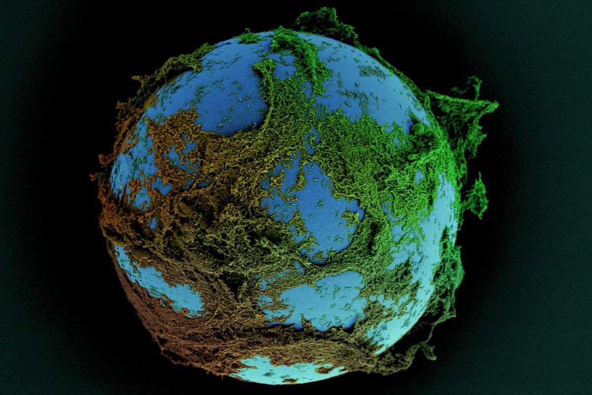 Biofilm resembles globe.