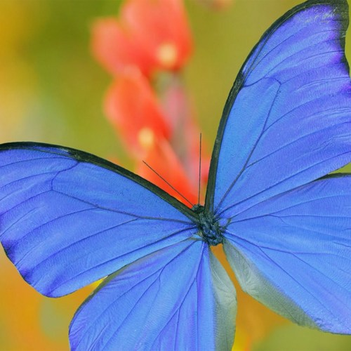 The Wyss Institute is developing a new type of coating for catalytic converters that, inspired by the nanoscale structure of a butterfly's wing, can dramatically reduce the cost and improve the performance of air-purification technologies, making them more accessible.