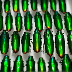'The Rockefeller Beetles' explores the beauty of a major gift