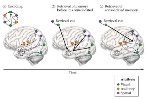 Cognitive and Language Neurophysiological Indices for
