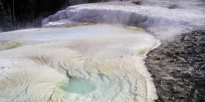 hot spring microbes