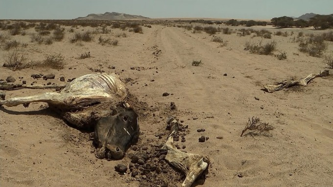 The peaceful little-known lands in the Horn of Africa have been turned into wasteland for precious livestock