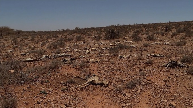 Carcasses of livestock were dotted across the arid land.