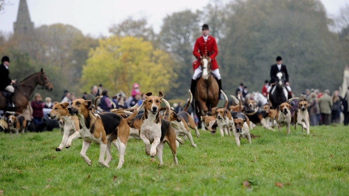 Fox hunting has been illegal since 2005