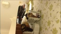 1,500 stairlift bought for dog with a bad back | Calendar ...