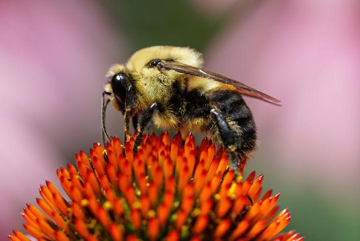 Пчёлы на беспроводном ошейнике
