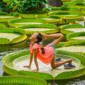 Даже рыбы фотографируются с водяными лилиями