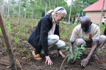 "UDPATE: Dr. Jane Goodall & JGI's Forest ""Engineer"" in Uganda"