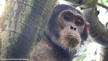 JGI Jungle Journals: Notes from Gombe, Tanzania Part I