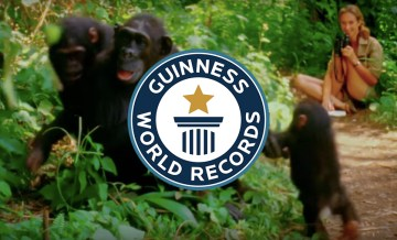 Research in Gombe is OFFICIALLY Guinness' Longest Chimp Study!