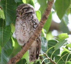 Birds in Bandhavgarh