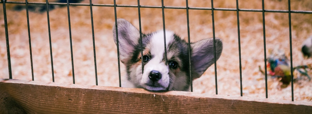 Federal Judge Overturns Iowa Law on Undercover Animal Cruelty Investigations