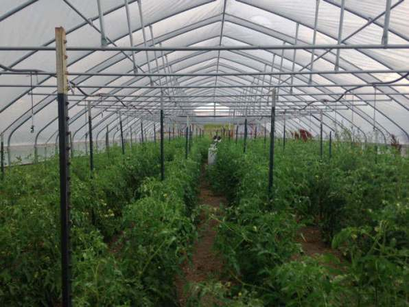Greenhouse at Red Wagon Farm in Longmont