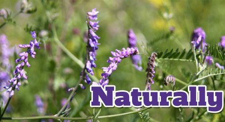 Naturally: Edible Plant Safety