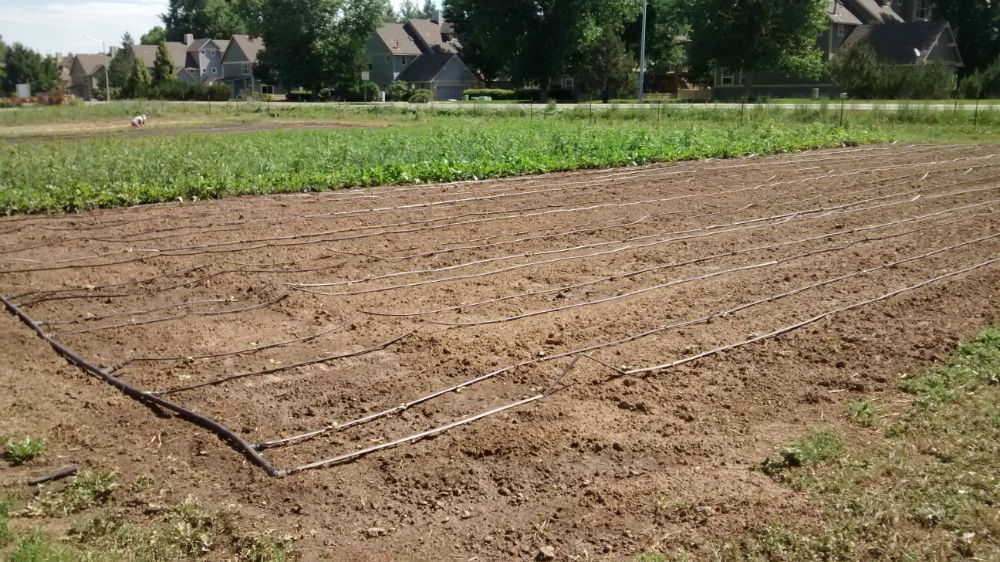Ollin Farms Drip Irrigation