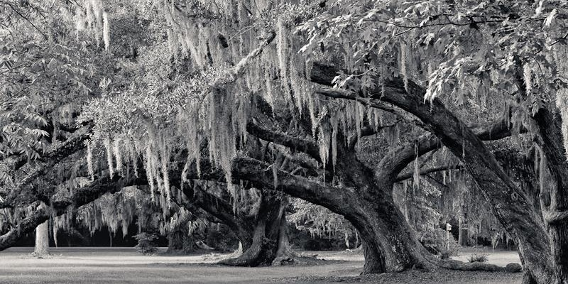 Black and White photo of trees