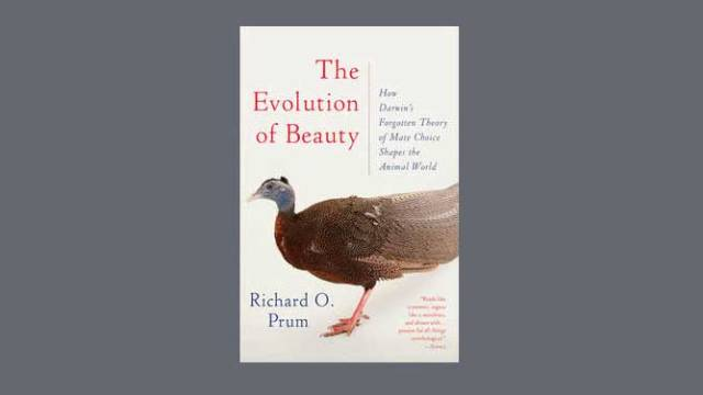 richard o prum evolution of beauty