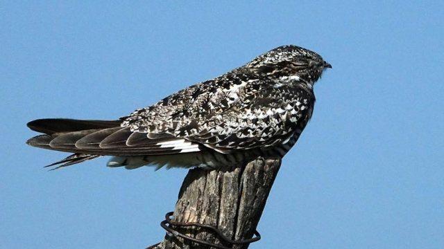 Nighthawk - Scott E. Severs