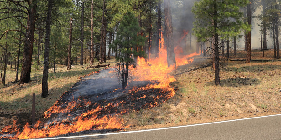 Wildland Firefighters in Boulder Encourage Homeowners to do Fire Mitigation