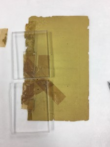 Image of a page with severe tape damage on the left of the page