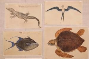 Drawings of a lizard, fish, tern, and sea turtle