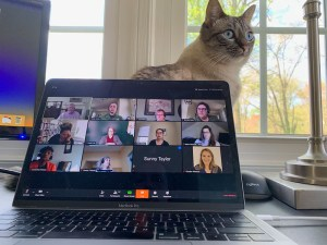 A cat, staring from behind a laptop computer screen displaying rows of images of attendees gathered for a Zoom meeting.