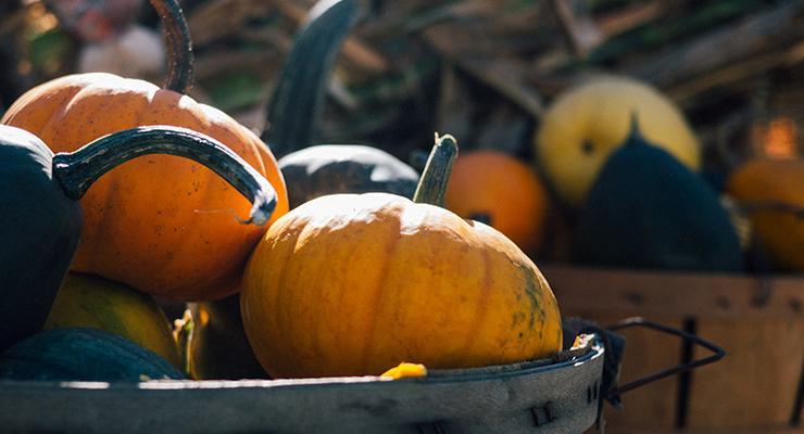 pumpkins2fi