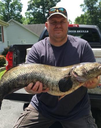 Photo of record-breaking snakehead