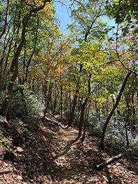 Cherry Creek Trail at Deep Creek Lake State Park