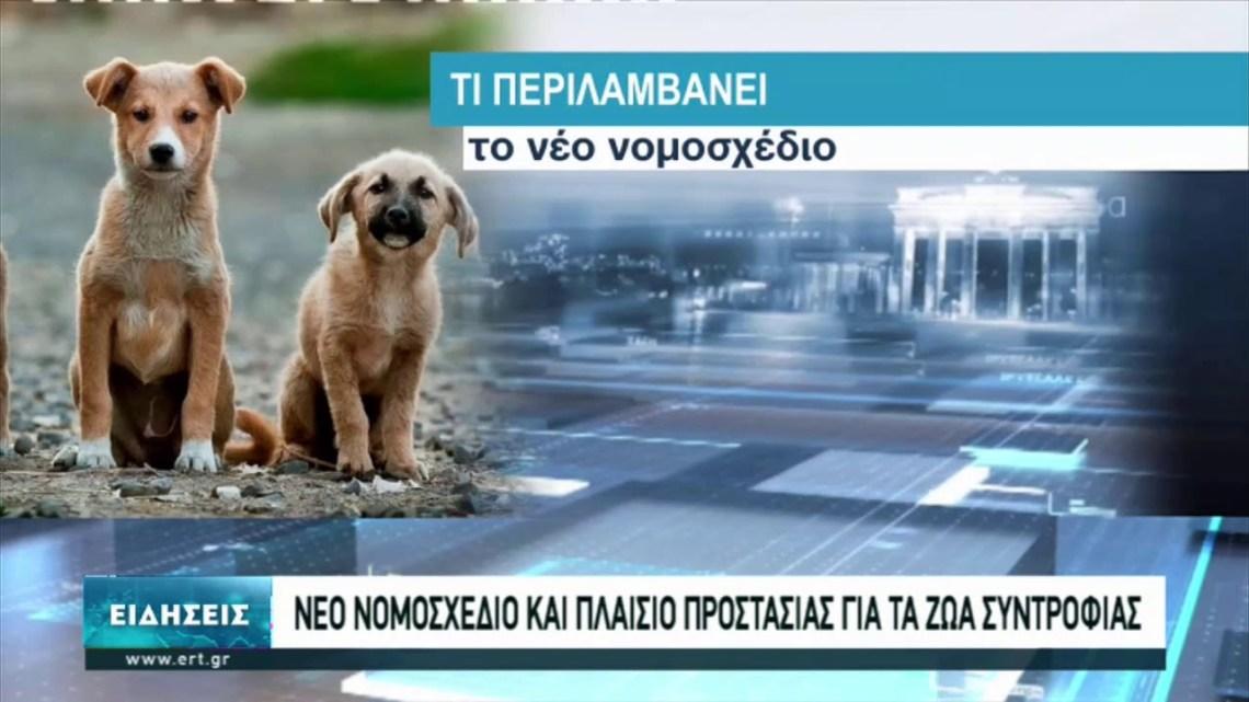 Θετικές οι αντιδράσεις για το νομοσχέδιο για τα ζώα συντροφιάς | 28/02/2021 | ΕΡΤ