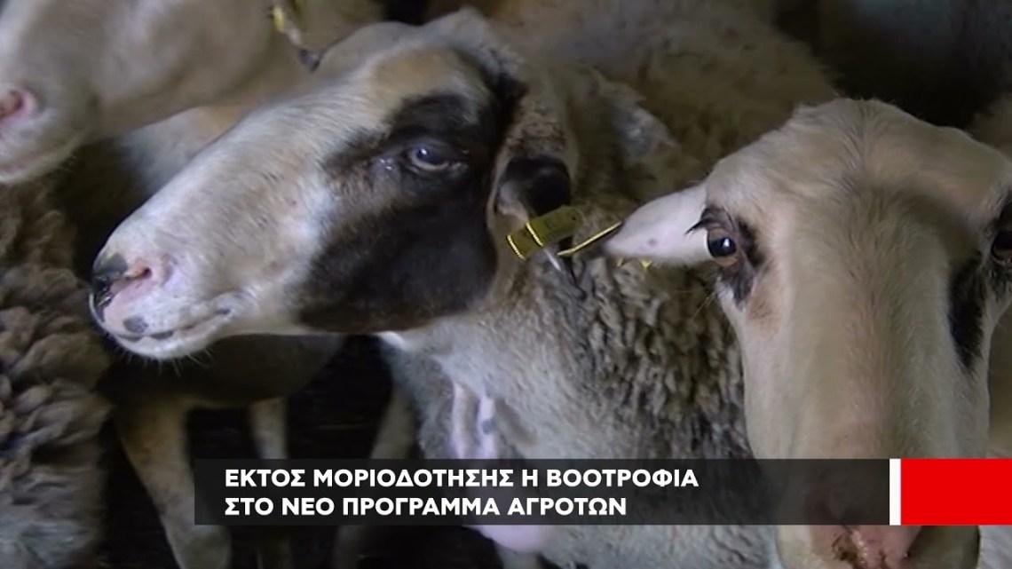 Νέο πρόγραμμα αγροτών-κτηνοτρόφων | Εκτός μοριοδότησης η βοοτροφία