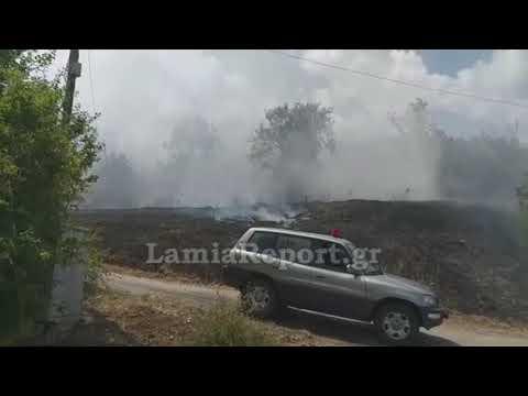 LamiaReport.gr: Κατάσβεση πυρκαγιάς στην Καστανιά Υπάτης